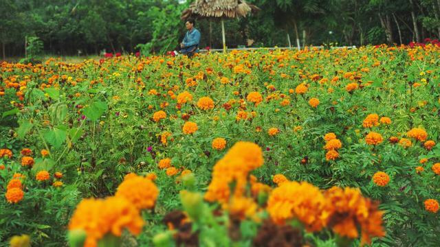 destinasi wisata di pekanbaru