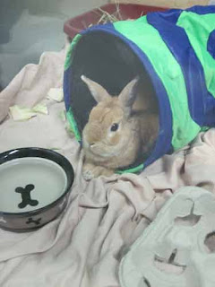 Bunny At Toronto Humane Society