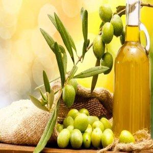Berbagai manfaat dari Olea europaea zaitun