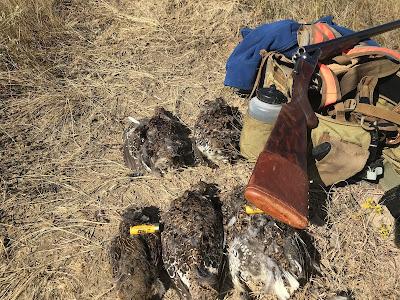 Hunt montana bird dogs and bird hunting