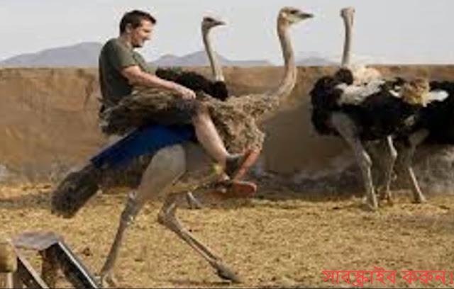 ডানা থাকা সত্ত্বেও যে পাখিগুলো উড়তে পারে না। The birds can not fly despi...
