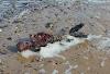 Cadaver de sirena encontrado en playa de Londres