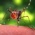 Dengue and Dengue Hemorrhagic Fever | for health care Practitioners