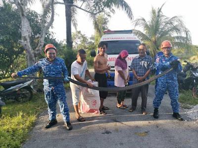 Ular king kobra 4 meter ditangkap petugas