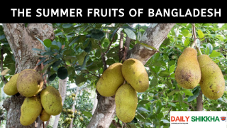 paragraph on the Summer Fruits of Bangladesh