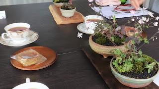 山野草盆栽の教室の講義風景