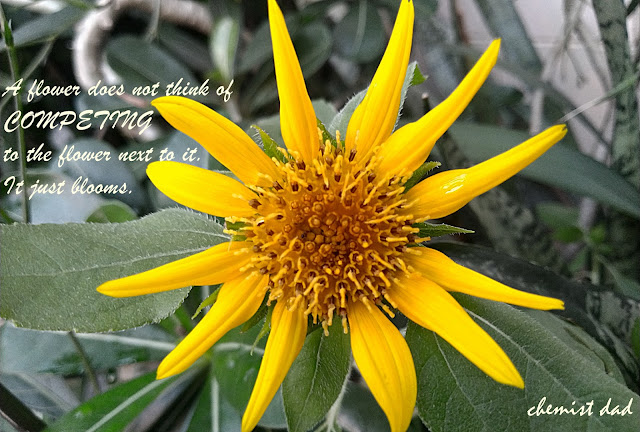 flower power tuesday, quotes about flowers, quotes about life, competition, sunflower,