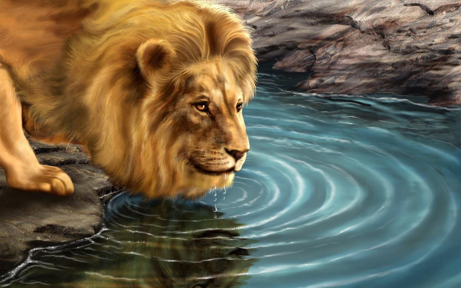 Full HD Beautiful Lion 1080p Wallpaper ~ HD Wallpapers ...