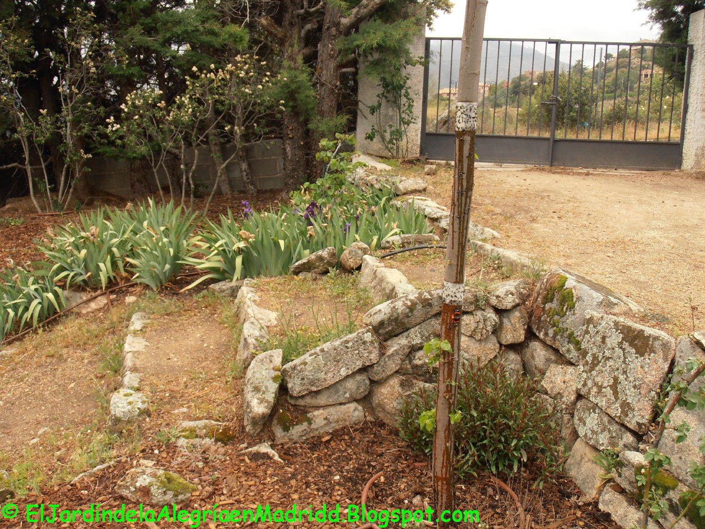El jard n de la alegr a cola adhesiva como barrera for Hormigas en el jardin