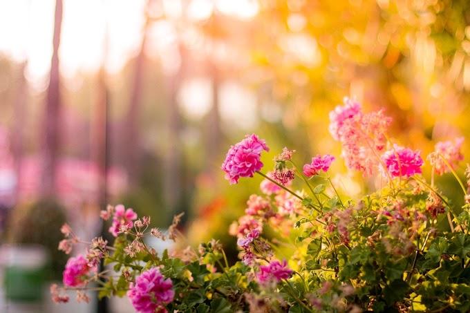 Sklep ogrodniczy online – co można w nim kupić? Jaki sklep ogrodniczy wybrać?