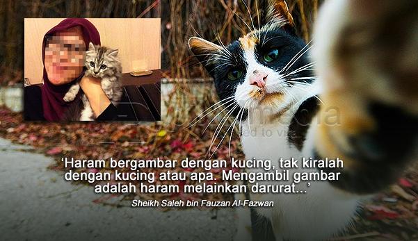 kucing, bergambar,gambar dengan kucing, hukum bergambar