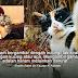 'Haram Bergambar Dengan Kucing'- Ulama Saudi