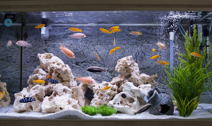 How to Remove Stains Caused by Hard Water in Your Aquarium