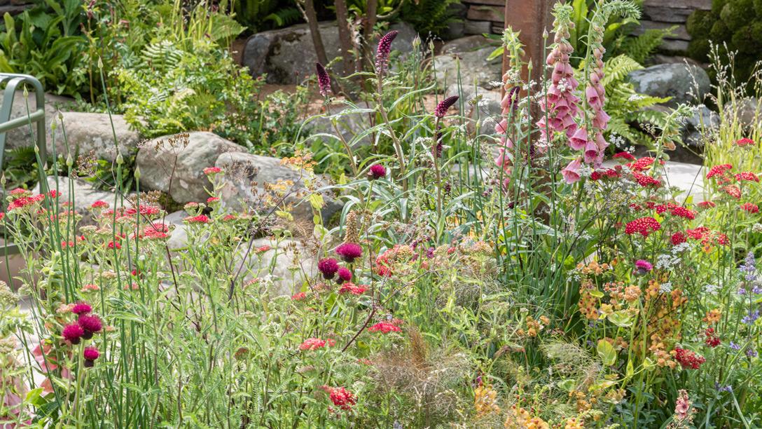 Herbaceas de flores rosas, fucsia y carmesí