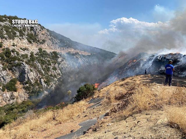 Σε εξέλιξη μέσα σε χαράδρα η πυρκαγιά στον Δήμο Επιδαύρου - Ρίψεις από αεροσκάφη και ελικόπτερο