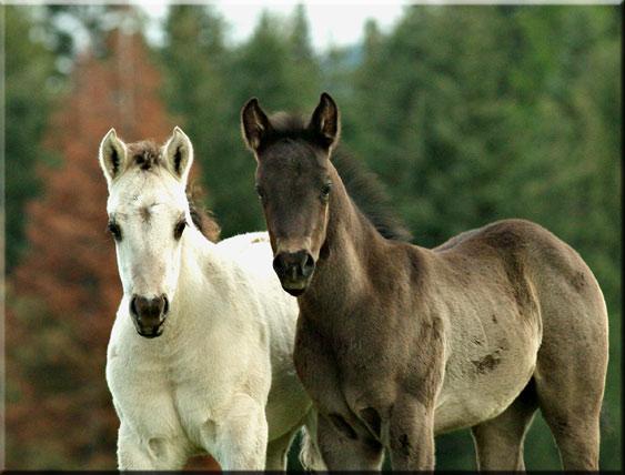 foals - photo #30