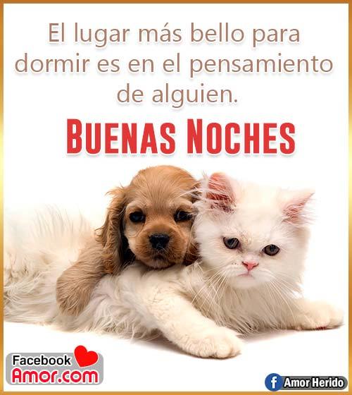 imágenes bonitas de buenas noches gato y perro