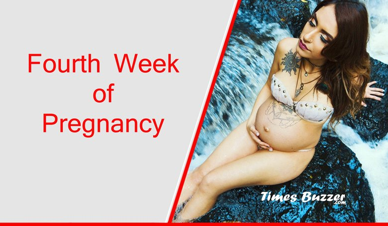 Fourth Week of Pregnancy