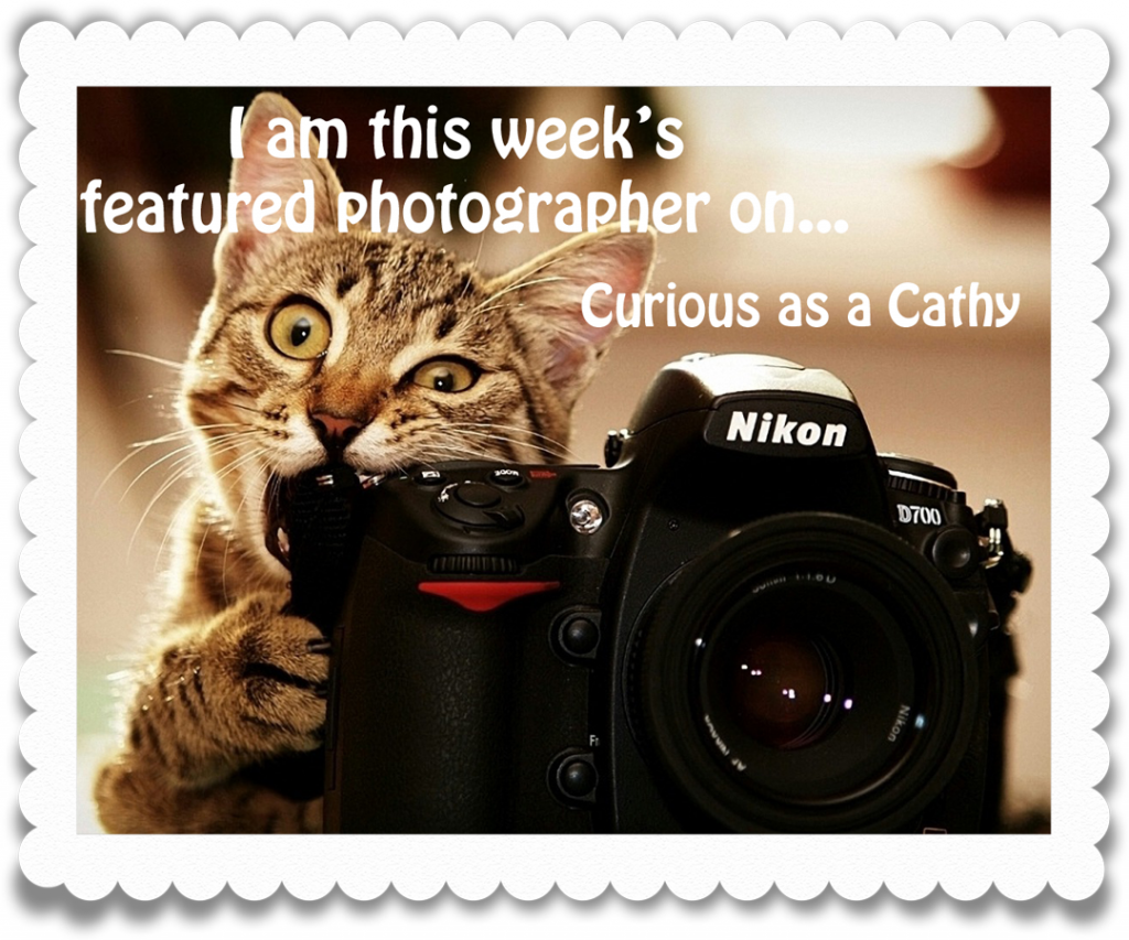 featured photography award - curious as a cathy tag