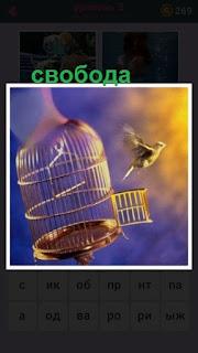 из клетки выпустили птицу на свободу