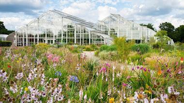 Una pradera sudafricana en RHS Garden Wisley