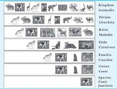 Macam-Macam Pengelompokan Atau Klasifikasi Makhluk Hidup pada Klasifikasi Sistem Alami, Buatan dan Filogenik