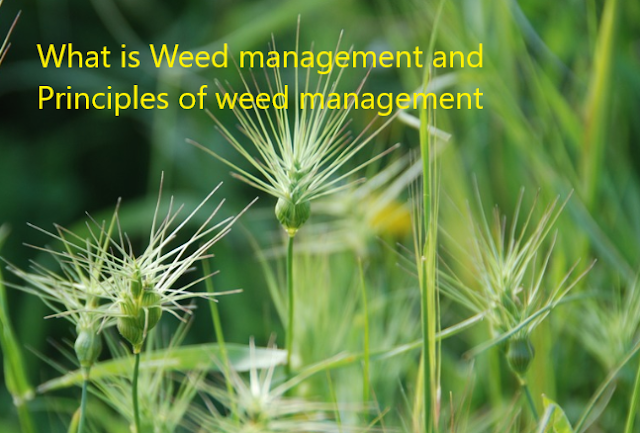 weed management principles