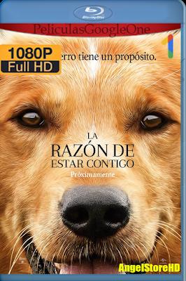 La Razón De Estar Contigo (2017) [1080p BRRip] [Latino] [Google Drive] – By AngelStoreHD