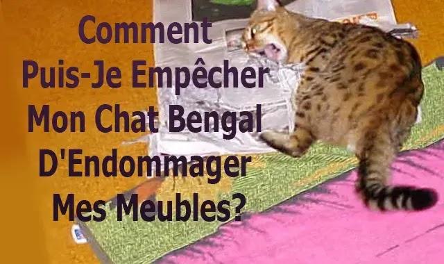 Comment Puis-Je Empêcher Mon Chat Bengal D'Endommager Mes Meubles?