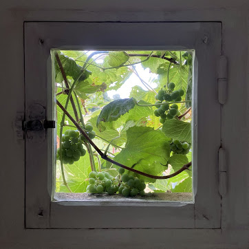 Window with Vines by Isabelle Duverger