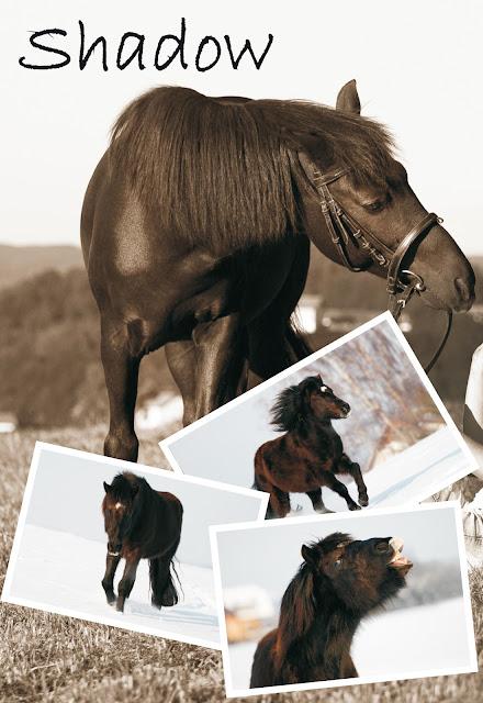 Pferdeblog, Reitsport, Pferdetraining