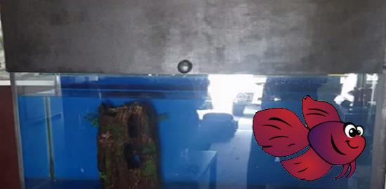 Pros of aquarium canopy