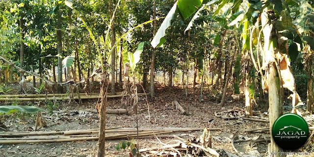Tanah Cocok Untuk Kavling Dekat PPPG Kesenian