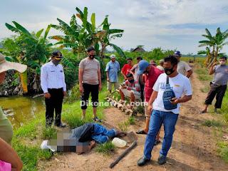 Petani Ditemukan Tewas Tertelungkup di Pematang Sawah