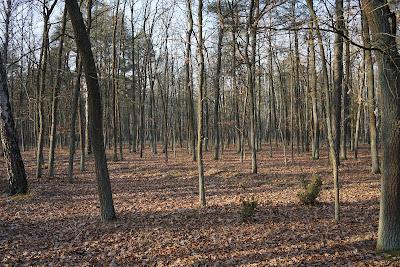 z Truskawia do Zaborowa Leśnego