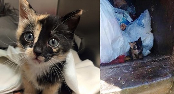Sanitation Worker Saves Tiny Kitten Found in His Truck