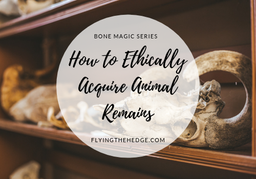Bone Magic Series: How to Ethically Acquire Animal Remains