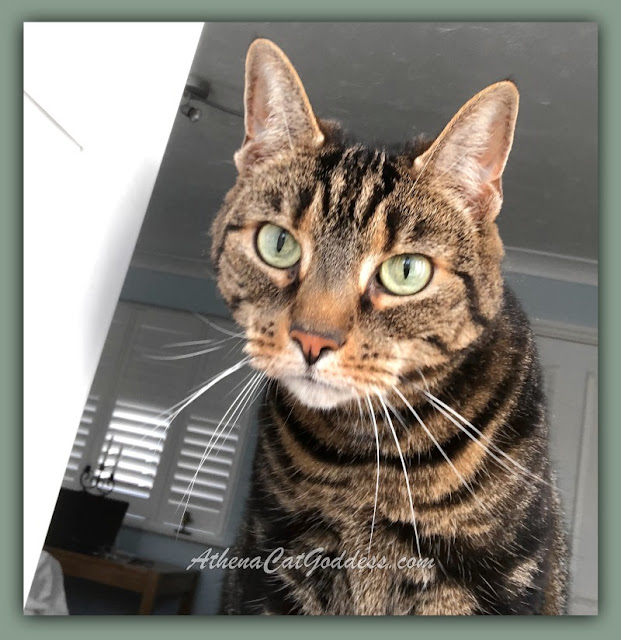 tabby cat with big green eyes looking out the window