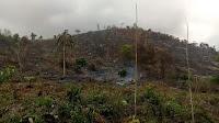 Ribuan Hektar Hutan Parado Terancam Gundul