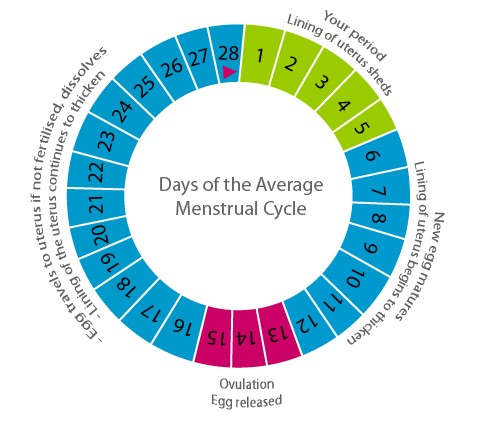 How do I know the ovulation days of pregnancy ?