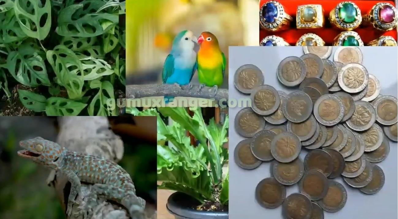 Monkey Bisnis bunga janda bolong, bunga gelombang cinta, talas/keladi wulung, ikan arwana, ikan louhan, ikan cupang, batu akik, burung lovebird, tokek, koin seribuan gambar sawit