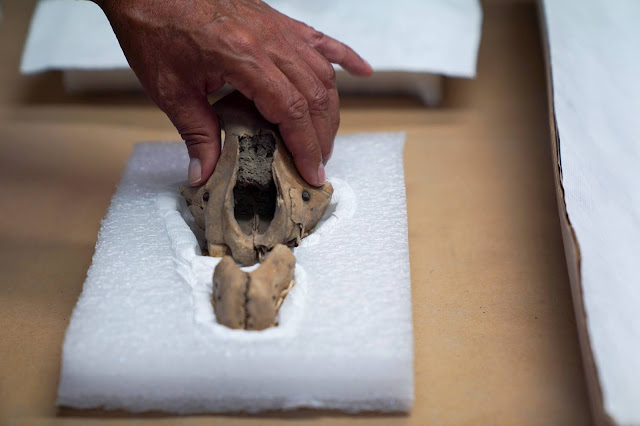 Below a pyramid, a treasure trove sheds new light on ancient Mexican rites