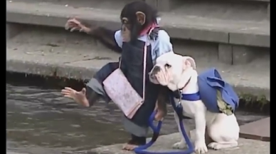 a monkey and a dog's unusual friendship