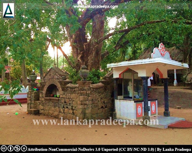 The ancient Bodhi tree and its rampart at Uruwala Valagamba temple, Gampaha
