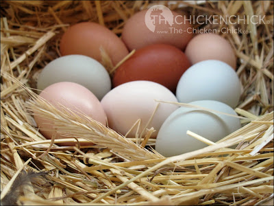 Long strands of clean straw make a lovely, rustic-looking nest for photographing eggs, but straw does not belong in backyard chicken coops for a variety of reasons we'll look at in this article.