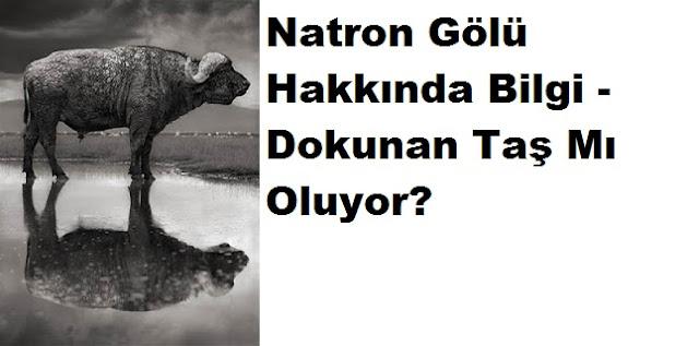Natron Gölü Hakkında Bilgi - Dokunan Taş Mı Oluyor?