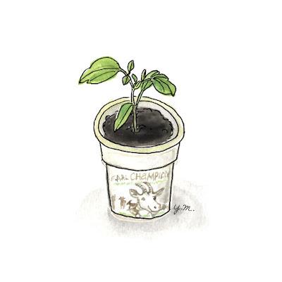 yogurt plant pot by Yukié Matsushita