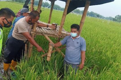 Menjaga Padi Di Sawah, Petani Di Jombang Meninggal Tersambar Petir
