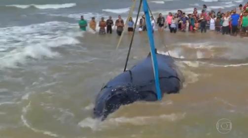 El impresionante rescate de una ballena en las costas de Brasil
