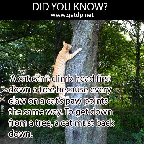 Getdp  A Cat Can U0026 39 T Climb Head First Down A Tree